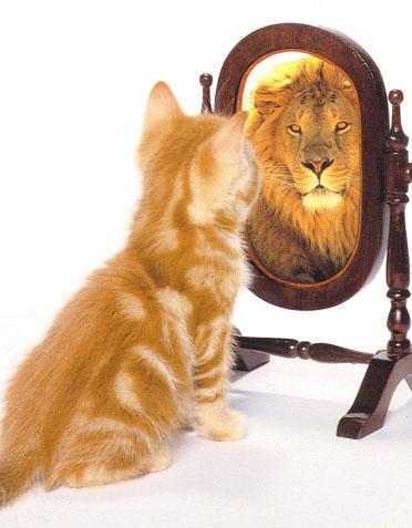 Imagem de um gato vendo-se no espelho como se fosse um leão