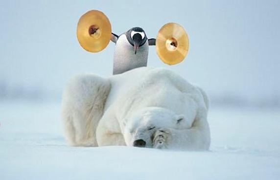 Un pingüino le hace una broma a un oso polar