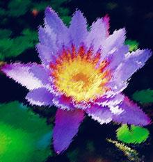 Image d'une fleur de lotus