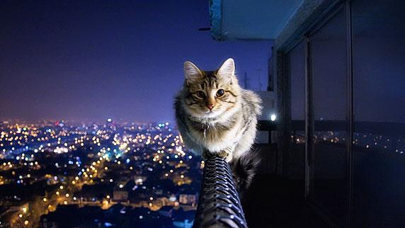 Um gato se equilibrando numa sacada, muito relaxado.